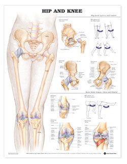 Education Scientific Products  -  Hip and Knee