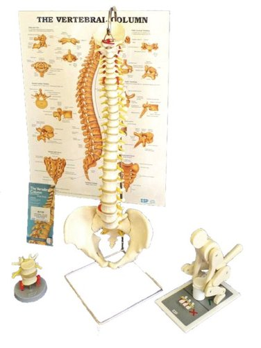 Education Scientific Products  -  Manual Handling Kit- Intermediate