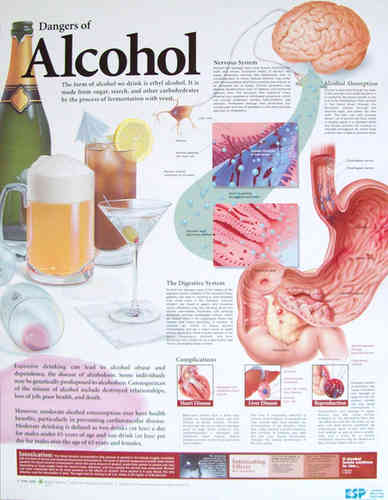 Education Scientific Products  -  Dangers of Alcohol